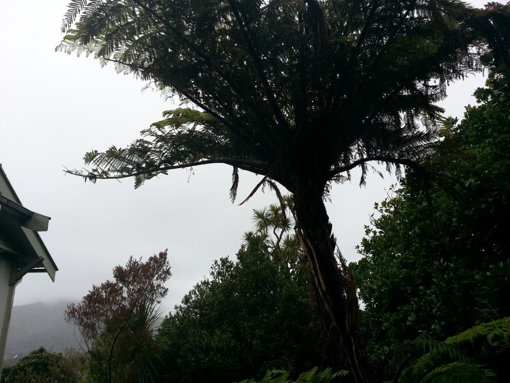 Ferns in the mist. Pretty kiwi as bru.